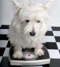 Perro-obeso-120x134