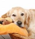 Caracteristicas-de-camas-para-perros-120x134