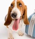 Viajar-mascotas1-120x134
